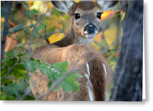 Pea Ridge Greeting Cards - Playful Fawn Toddler Greeting Card by Nava  Thompson