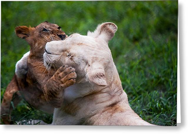 Unique Sights Greeting Cards - Playful Kids. Two Lion Cubs Greeting Card by Jenny Rainbow
