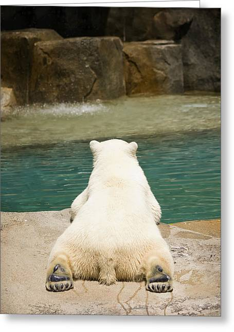 Nature Study Photographs Greeting Cards - Playful Polar Bear Greeting Card by Adam Romanowicz