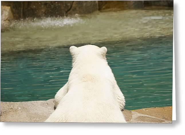 Playful Polar Bear Greeting Card by Adam Romanowicz