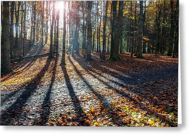 Playful Shadows Greeting Card by Semmick Photo