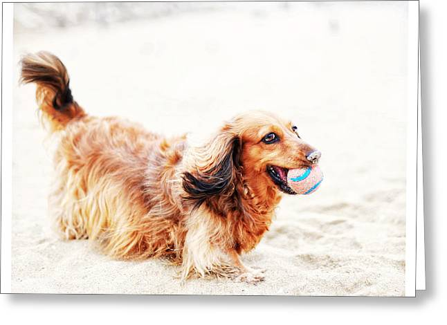 Hounddog Greeting Cards - Playing Fetch with Sophie  Greeting Card by Johnny Ortez-Tibbels