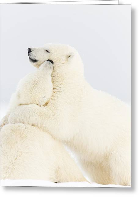 Polar Bear Standing Greeting Cards - Playing in the Snow Greeting Card by Tim Grams