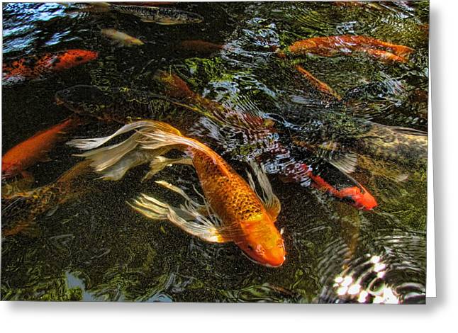 Playing Koi With Me Greeting Card by Shannon Story