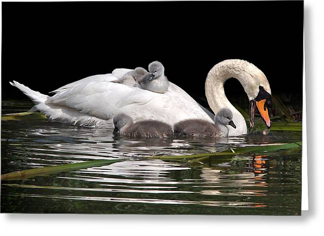 Nestled With Love Greeting Cards - Playtime And Learning Greeting Card by Gill Billington