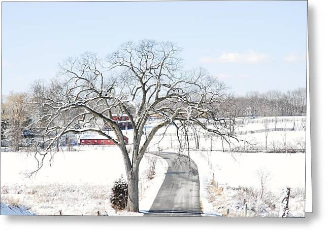 Roadway Greeting Cards - Pleasant Valley oak in winter Greeting Card by Linda Covino