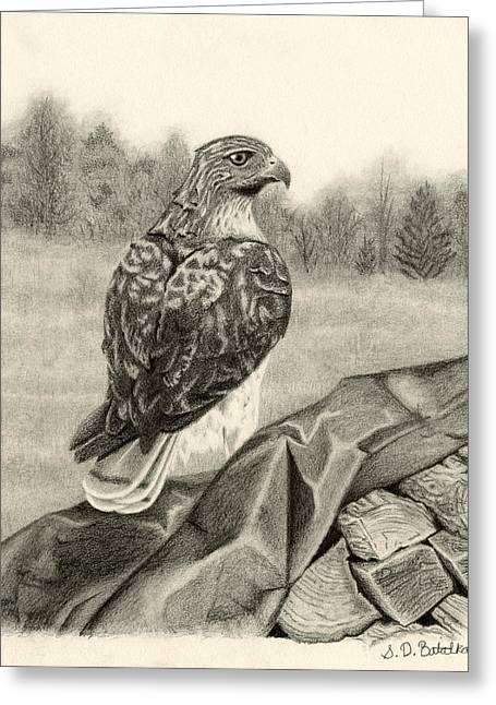 Black Lodge Drawings Greeting Cards - Pleasant Valley Red-tailed Hawk Greeting Card by Sarah Batalka
