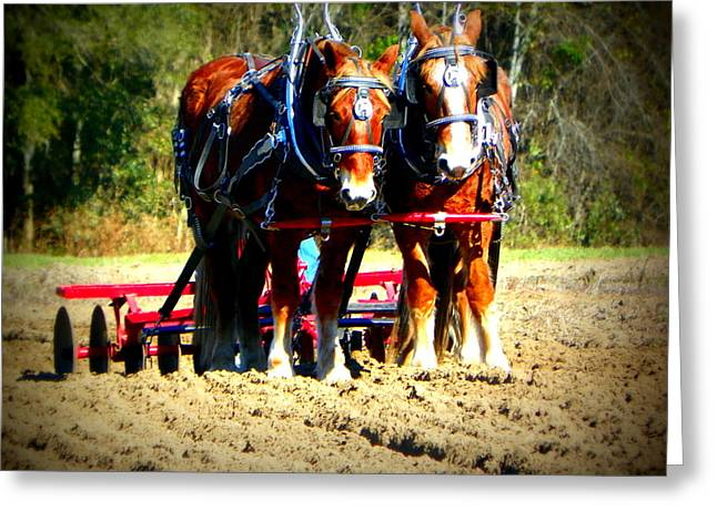 Equine Art Work Greeting Cards - Plow Day Greeting Card by Sheri McLeroy