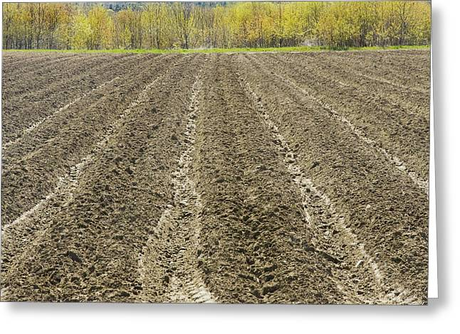 Sowing Greeting Cards - Plowed Spring Farmland Ready For Planting In Maine Greeting Card by Keith Webber Jr