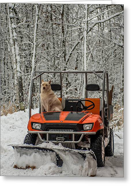 Huskies Greeting Cards - Plowing Companion Greeting Card by Paul Freidlund