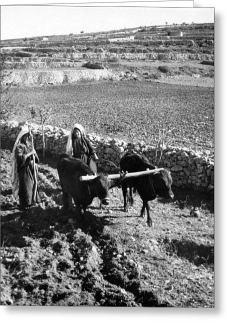 Hebron Greeting Cards - Plowing Near Hebron Greeting Card by Munir Alawi