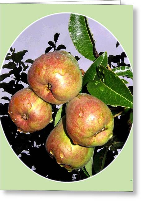 Pear Art Digital Art Greeting Cards - Pluie Sur Les Poires Greeting Card by Will Borden