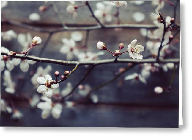 Plum Blossoms Greeting Cards - Plum and Mocha Greeting Card by Lupen  Grainne