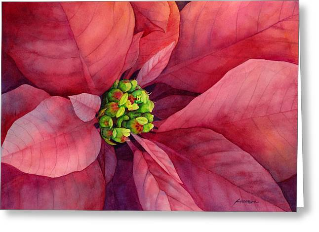 Green Leafs Greeting Cards - Plum Poinsettia Greeting Card by Hailey E Herrera