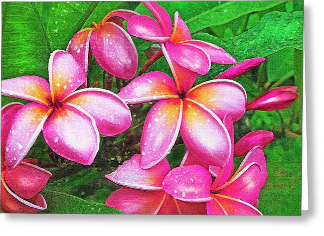 Dewdrops Digital Greeting Cards - Plumeria After The Raiin Greeting Card by Jane Schnetlage