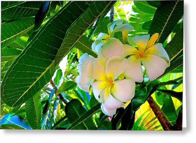 Plumeria Beauty Greeting Card by Florian Rodarte