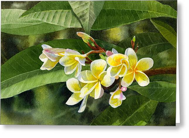 Yellow Leaves Greeting Cards - Plumeria Blossoms Greeting Card by Sharon Freeman