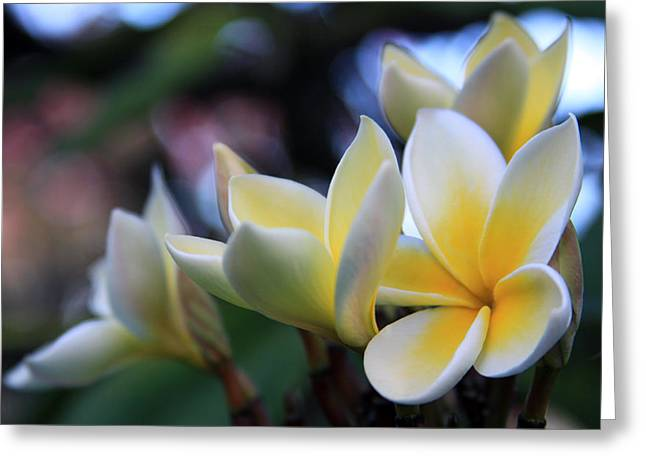 Lei Greeting Cards - Plumeria Frangipani Sunshine Lei Greeting Card by Karon Melillo DeVega