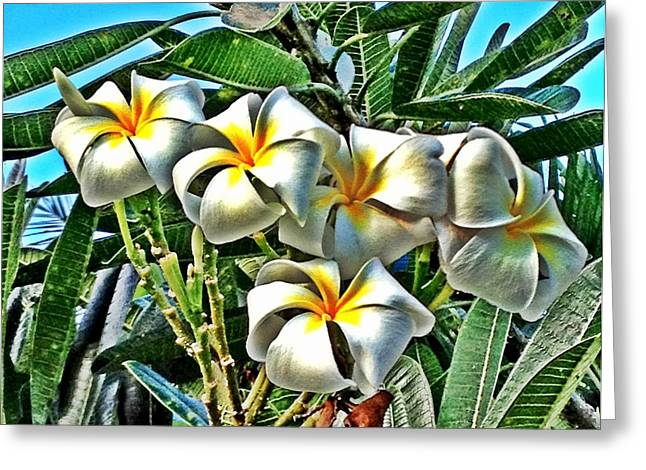 Heavenly Scent Greeting Cards - Plumeria Greeting Card by Julianne Baltrus