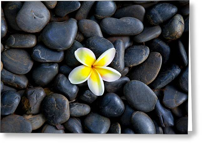 Flora Framed Prints Greeting Cards - Plumeria Pebbles Greeting Card by Sean Davey