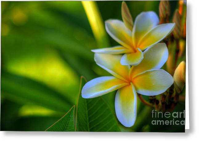 Tropical Greeting Cards - Plumeria Tropicals Greeting Card by Kelly Wade