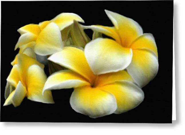 Mayflower Mixed Media Greeting Cards - Plumeria Yellow And White Greeting Card by Dennis Buckman