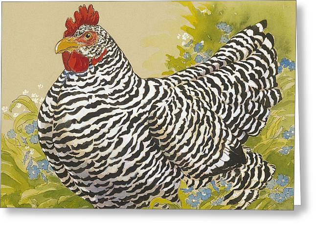 White Chicken Greeting Cards - Plymouth Rock Hen 4 Greeting Card by Tracie Thompson