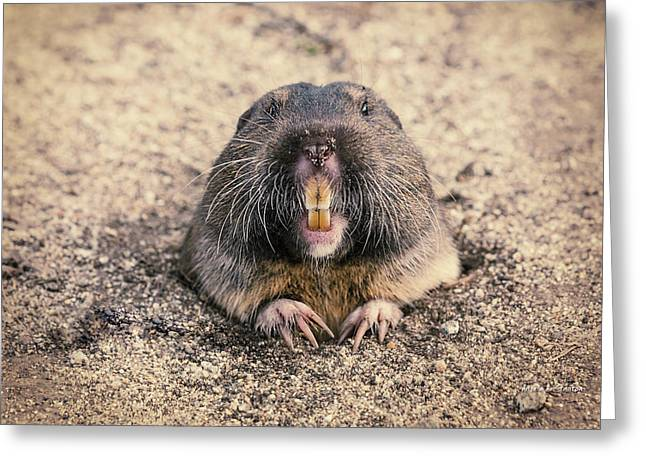 Half Moon Bay Greeting Cards - Pocket Gopher Chatting Greeting Card by Angela A Stanton