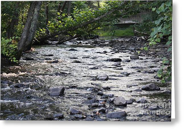 Trees Reflecting In Water Greeting Cards - Poconos Gentle Stream Greeting Card by John Telfer