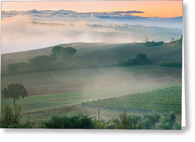 Metal Vineyard Print Greeting Cards - Podere Belvedere - Tuscany - Italy Greeting Card by Henk Meijer Photography