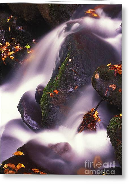 Colors Of Autumn Greeting Cards - Poetry in Motion - 290 Greeting Card by Paul W Faust -  Impressions of Light