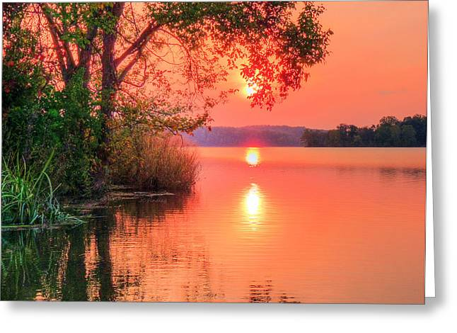 Watershed Greeting Cards - Pohick Bay Greeting Card by JC Findley