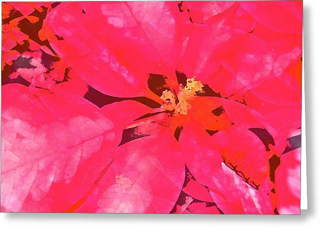 Pamela Cooper Greeting Cards - Poinsettia 1 Greeting Card by Pamela Cooper