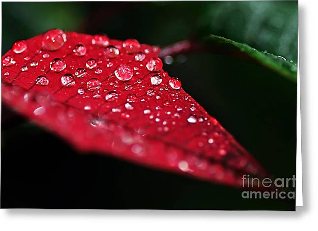 Poinsettia Leaf with Water Droplets Greeting Card by Kaye Menner