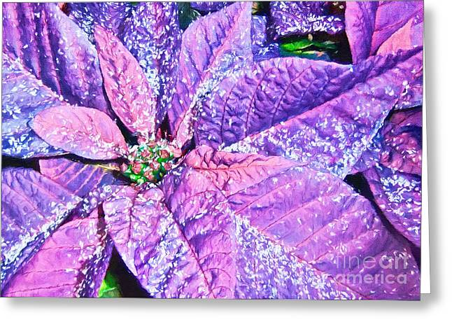Euphorbia Greeting Cards - Poinsettia of Pink and Purple Greeting Card by Darren Fisher