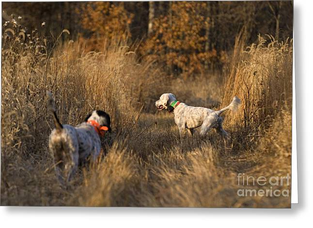 Hunting Bird Greeting Cards - Point and Honor - D009273 Greeting Card by Daniel Dempster