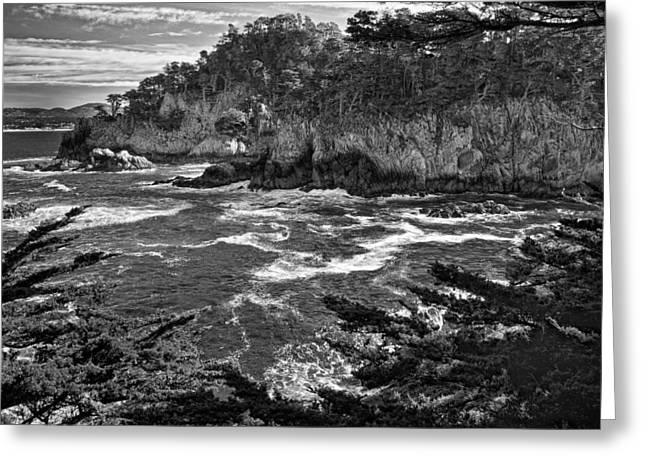 Point Lobos Greeting Cards - Point Lobo  Greeting Card by Ron White