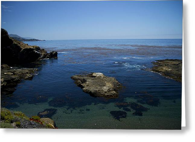 Point Lobos Greeting Cards - Point Lobos 1 Greeting Card by Tom Kelly