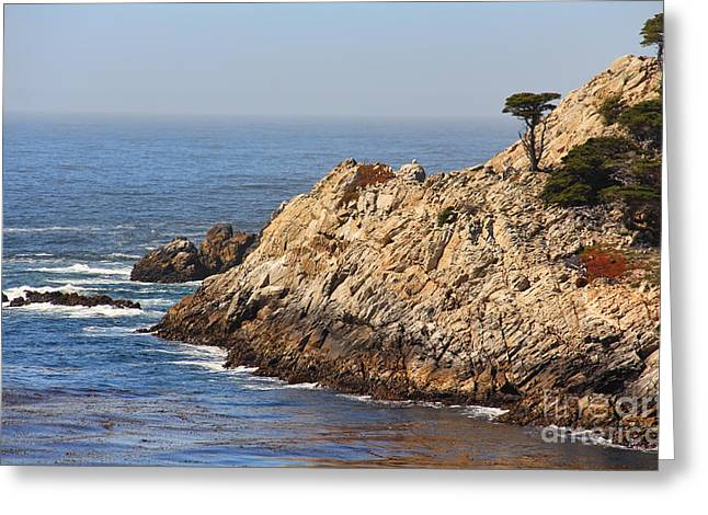 Point Lobos Photographs Greeting Cards - Point Lobos 7697 Greeting Card by Jack Schultz