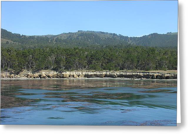 Point Lobos Greeting Cards - Point Lobos C Greeting Card by Mary Chappell