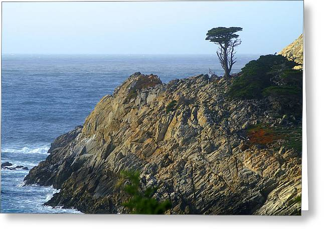 Point Lobos State Greeting Cards - Point Lobos Cypress Greeting Card by David Armentrout