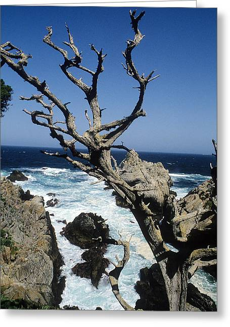 Point Lobos Greeting Cards - Point Lobos In California Greeting Card by Carl Purcell