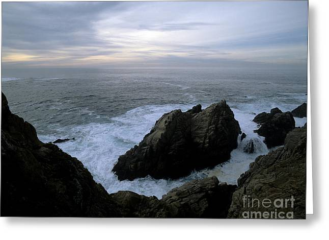 Point Lobos Greeting Cards - Point Lobos Greeting Card by Rolf Adlercreutz