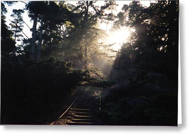 Point Lobos Greeting Cards - Blast of Sunlight Greeting Card by James Graham