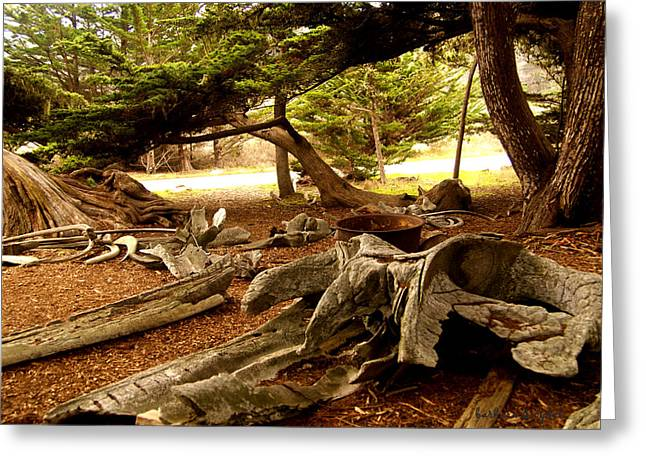 Point Lobos State Greeting Cards - Point Lobos Whalers Cove Whale Bones Greeting Card by Barbara Snyder