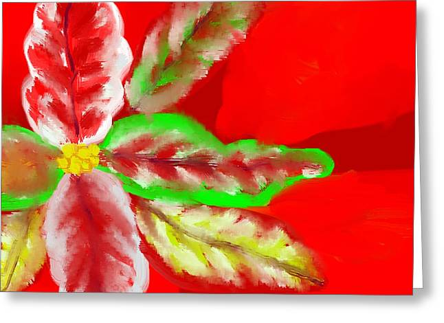 Abstract Digital Drawings Greeting Cards - Pointsettia Greeting Card by Doris Culverhouse