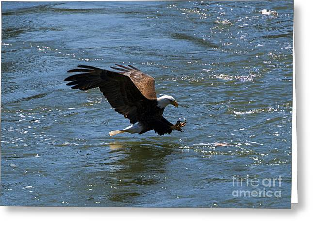 Yakima River Greeting Cards - Poised to Catch Greeting Card by Mike  Dawson