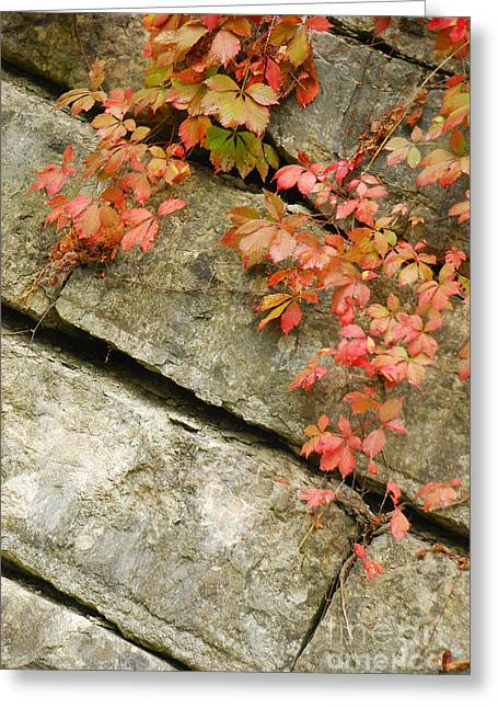 Indiana Autumn Greeting Cards - Poison Ivy Greeting Card by Mary Carol Story