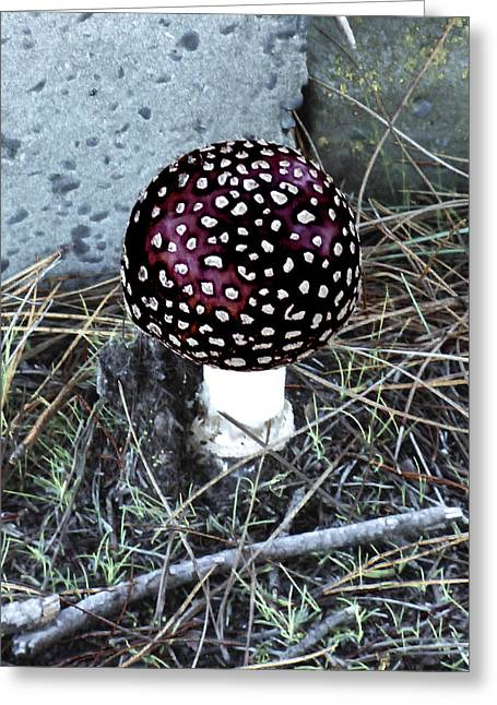 Round Fungi Greeting Cards - Poison  Greeting Card by Steve Taylor