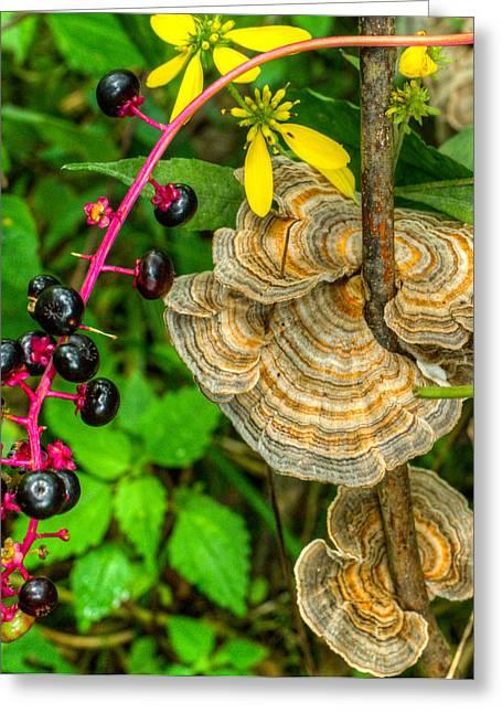 Poke Greeting Cards - Poke and Bracket Fungi Greeting Card by Douglas Barnett